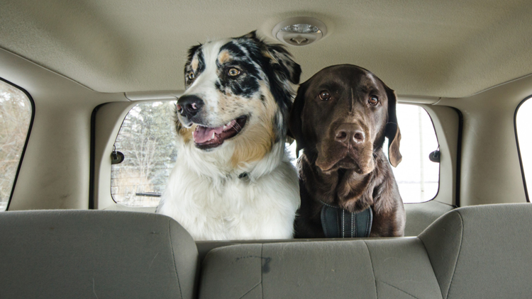pets safe in cars